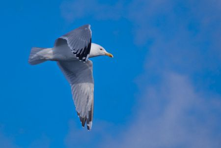 a hovering seagull above the sea in the sky photo