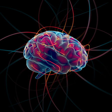 cerebro humano: Pensando proceso del concepto cerebro