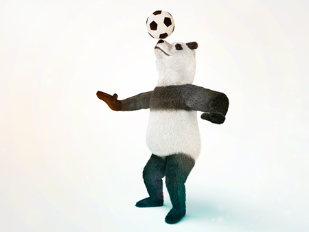involuntary: character circus bamboo bear giant panda standing spreading legs to the sides chasing a ball on his nose. involuntary amazing animals Stock Photo