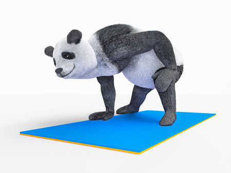 obesity: Panda practising yoga Stock Photo