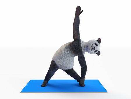 practicing: Panda practicing yoga asana