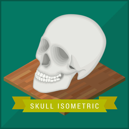 cranial skeleton: Human skull flat isometric icon. Cranium educational model vector illustration. Human anatomy symbol for medicine and science. Head biology pictogram concept. Medical model flat isometric vector sign. Illustration