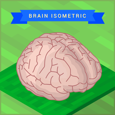 occipital: Lateral of human brain flat isometic illustration. Human brain flat isometric pictogram.