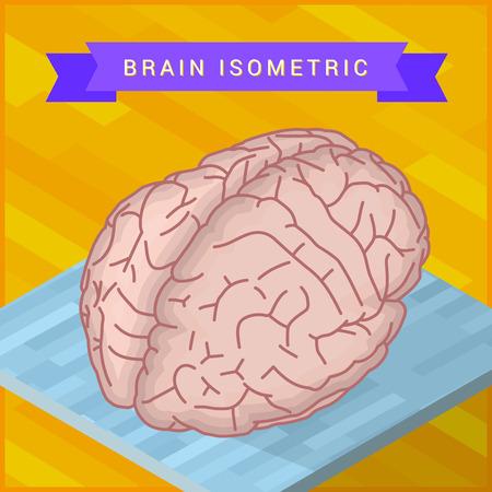 oblongata: isometric view of human brain flat vector icon. Pictogram of human brain. Human ogran sign.