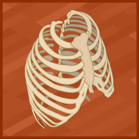 sternum: Human thorax flat isometric icon. Protextora bone rib cage or internal organs of thorax isometric flat illustration.