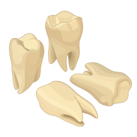 permanent: Human teeth isometric flat vector icons set. Dental implant vector flat isometric illustration, Human tooth isolated on white.
