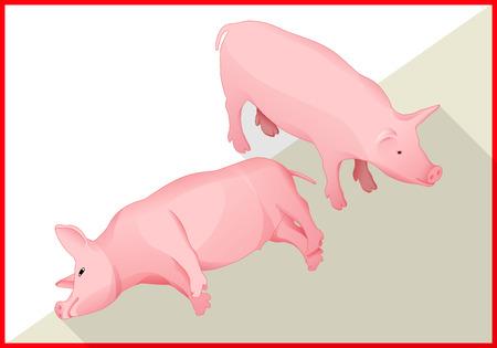 vertebrates: Pig isometric flat vector 3d illustration. Swine icon Illustration