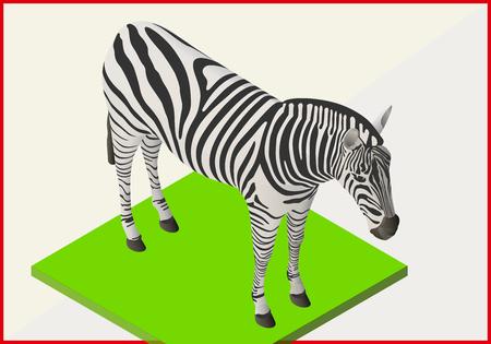 dobbin: Zebra isometric flat vector. Animal 3d illustration