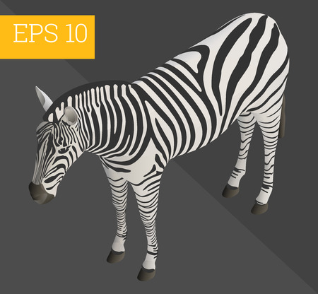 mammal: zebra eps10 vector 3d illustration. wildlife african mammal Illustration