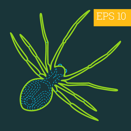 arachnoid: spider linear vector illustration. insect outline icon.