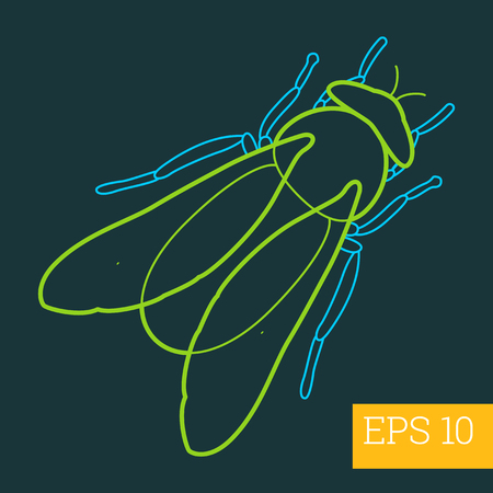 crawly: gadfly linear vector illustration. insect outline icon.