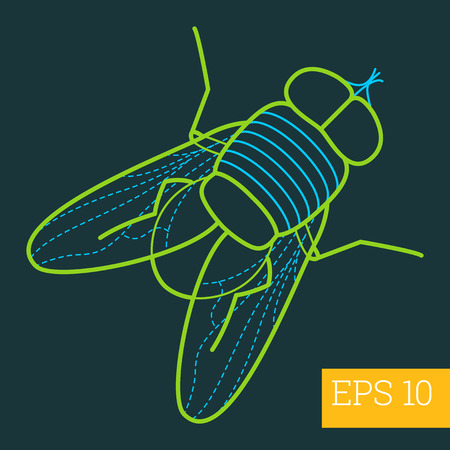musca: musca domestica linear vector illustration. insect outline icon.
