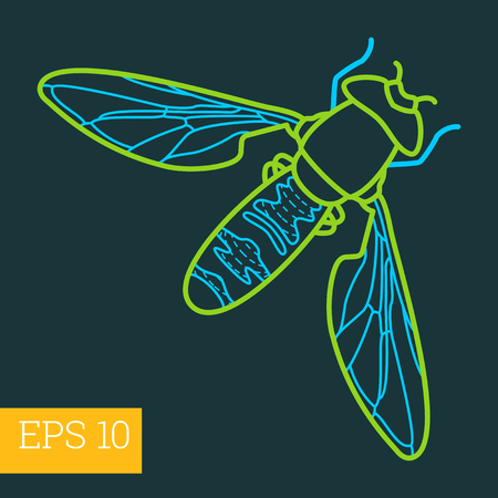 musca domestica: fly insect linear vector illustration. insect outline icon.