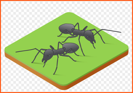 ants isometric vector. Insect illustation. wildlife eps picture