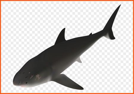 carcharodon: shark fish vector isometric illustation. ravenous inhabitant of sea Illustration