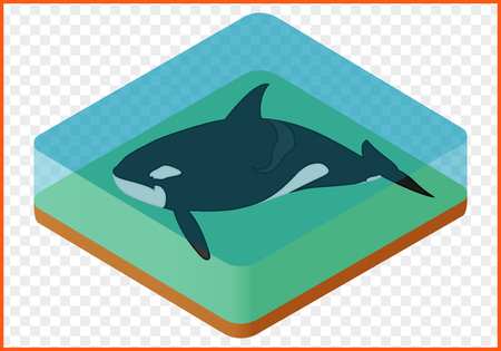 orcinus: Killer whale isometric isolated on transparent background vector. orcinus orca Illustration