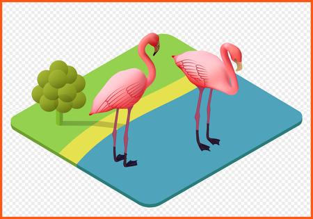 flamingo isometric isolated vector eps Illustration. waterfowl 3d