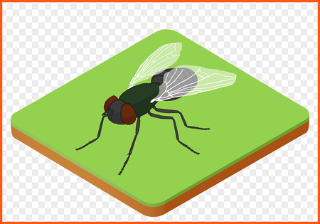 fly insect isometric isolated vector eps Illustration. house-fly 3d