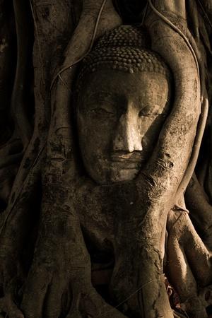 Buddha tree photo