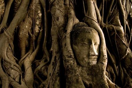 thai believe: Buddha tree