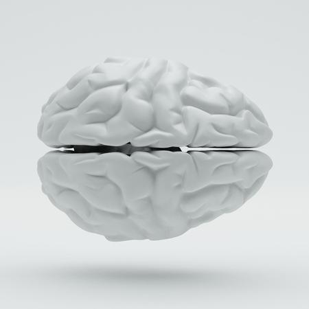 Brain isolated on white background photo