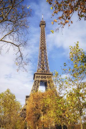 tower: Eiffel Tower through yellow trees.