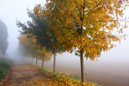 Misty autumn alley next to the field photo