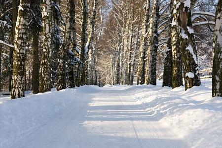 Snow alley photo