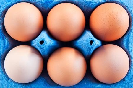 Eggs in carton photo