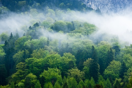 Gorgeous green forest in the fog photo