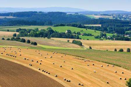Summer field Stock Photo - 10552405