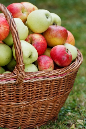 Apples in basket photo