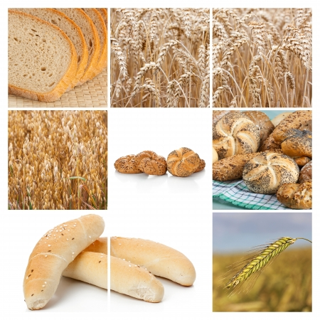 Wheat  Harvest concepts  Cereal collage photo