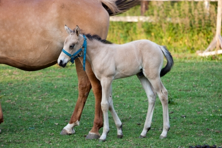 Mare and her foal in meadow photo