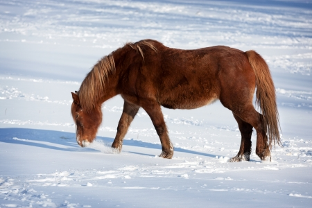 Horse in a cold winter pasture photo