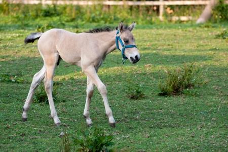 Cute little foal in a green meadow photo