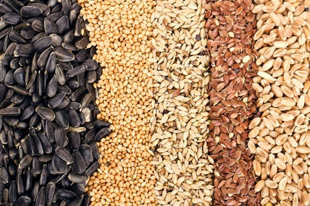 Cereal Grains and Seeds   Rye, Wheat, Barley, Oat, Sunflower, Flax