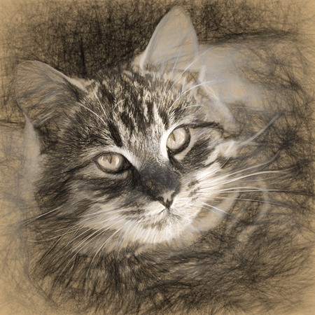 tabby cat: Digital structure of painting. Painted tabby cat