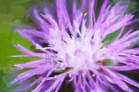 cornflower: Oil painting Cornflower on a green meadow. Flower oil painting background.