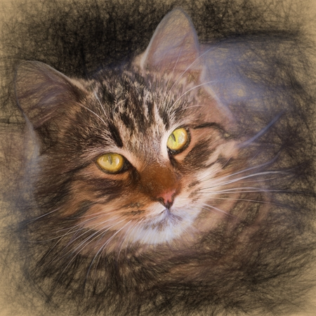 tabby cat: Pencil sketch with the image of a tabby cat Stock Photo