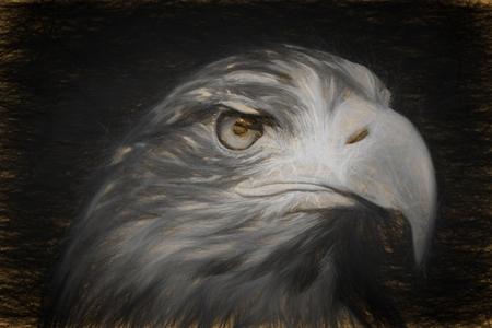 sea eagle: Pencil sketch with the image of a sea eagle (Haliaeetus albicilla)