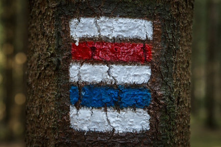 Colorful signs for hiking on the bark of a tree