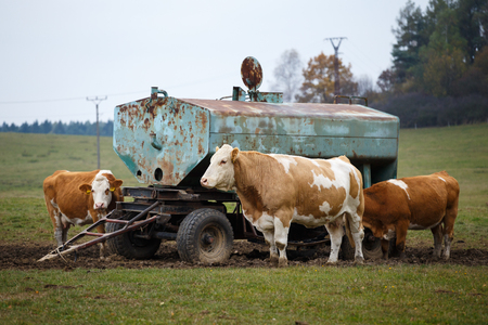 milker: Cows on pasture and water tank