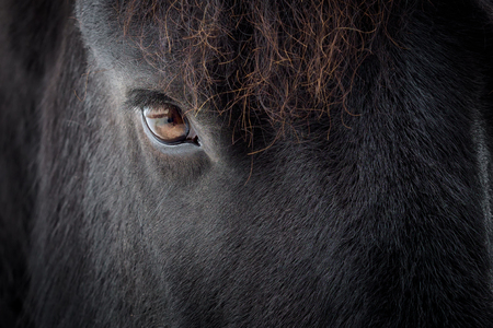 Eye of a friesian horse Stock Photo