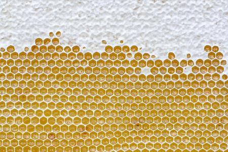 Honeycomb full of honey. Beekeeping concept