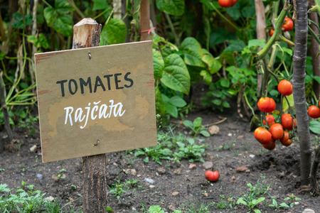 Inscription in Spanish and Czech on wooden board in the garden. Information sign and inscription tomatoes (tomates). Vegetable garden.