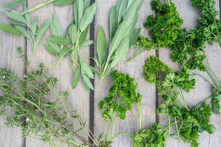 Drying fresh herbs and greenery for spice food on wooden desk background. Top view pattern Stockfoto