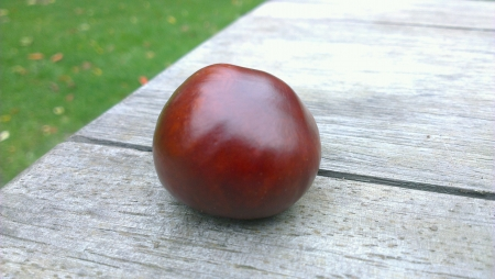 conker: a lonely Conker Stock Photo