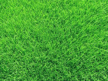 Fresh grass.