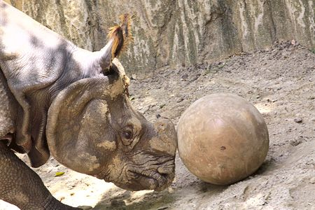 Playful rhino. photo